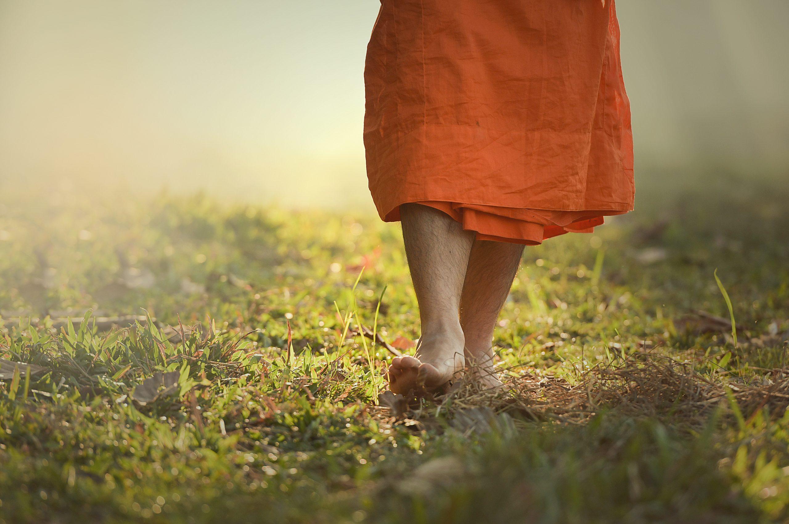 Buddhist monks walk on the grass