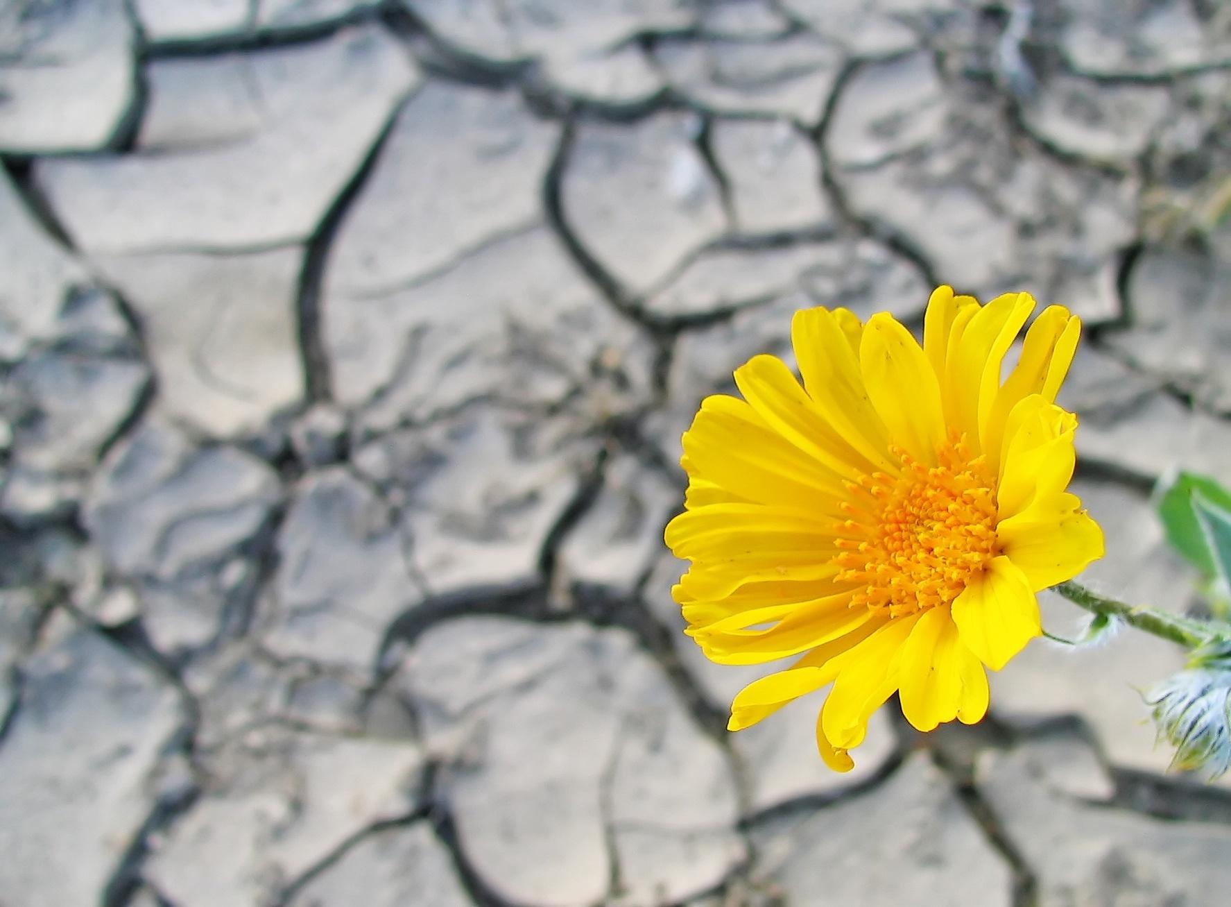 a splash of hope